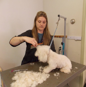 DogGrooming